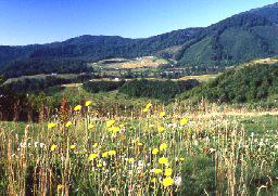 森吉山山麓高原